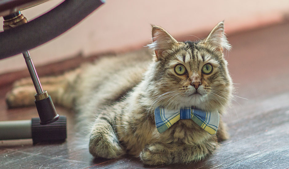 sli-bow-cat-2